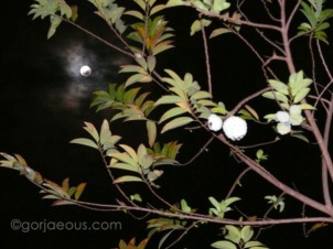 Lunar Eclipse 2009b