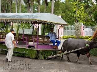 Carabao Ride, Villa Escudero