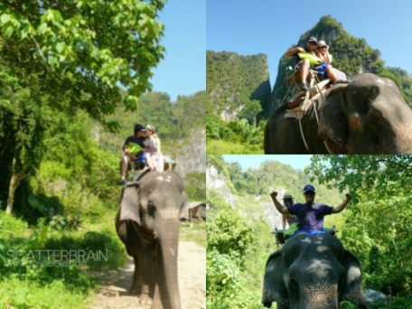 The Newlyweds and The Elephant