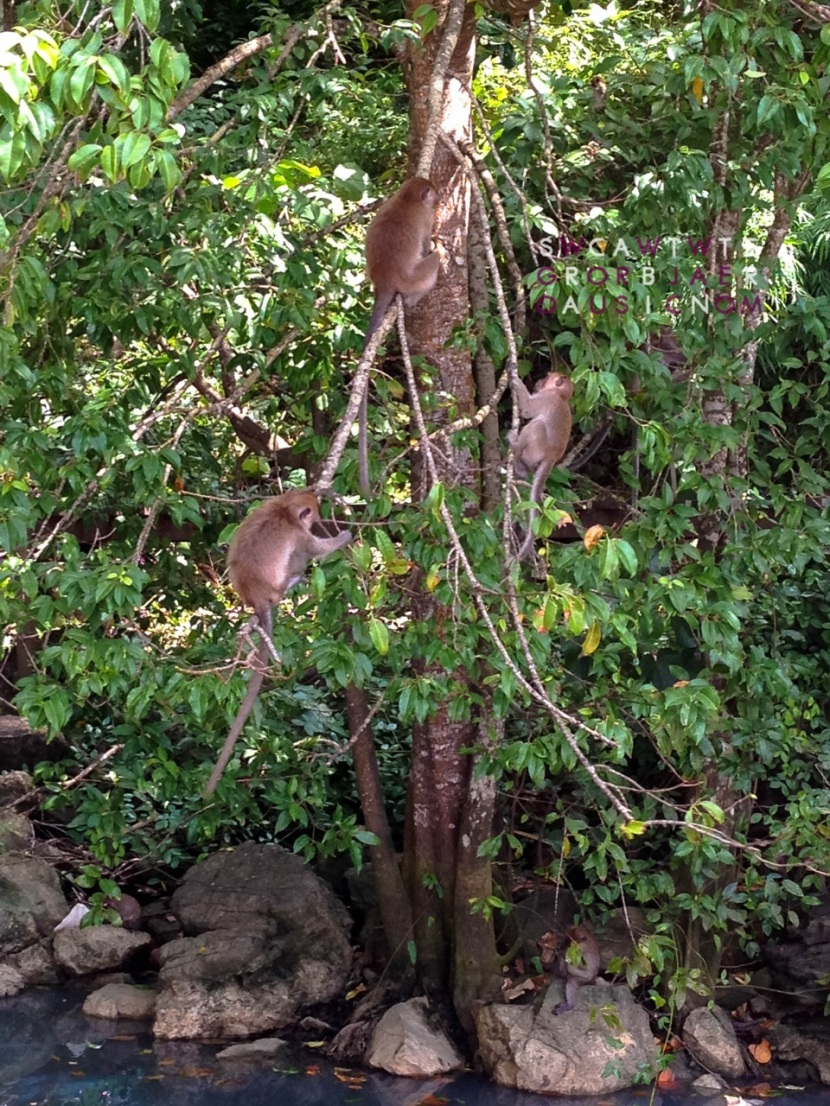 Monkey Sanctuary in Ao Nang Beach, Krabi, Thailand