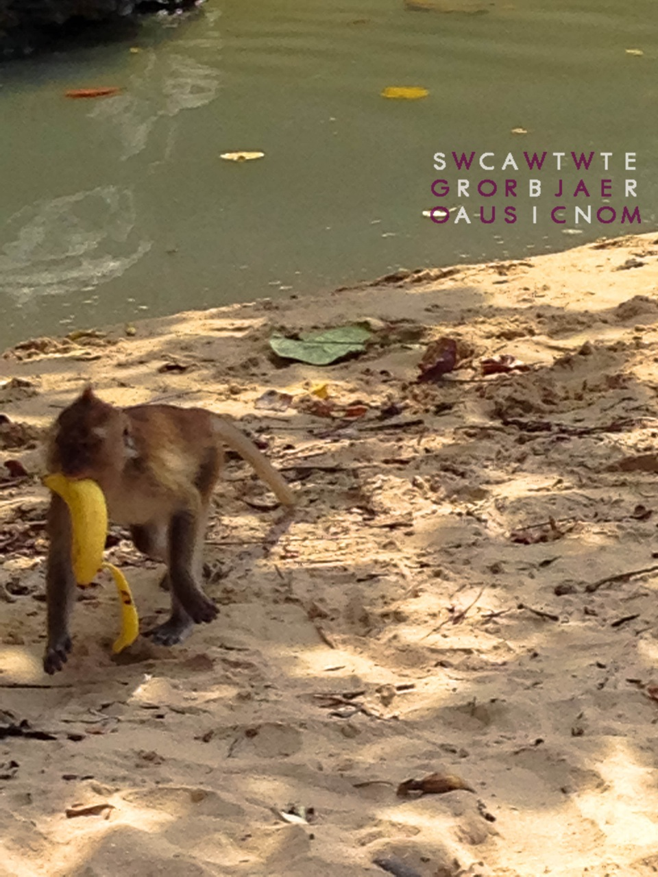 Stray Monkey | Ao Nang Beach, Krabi, Thailand